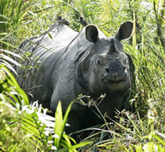 kaziranga-tour-package